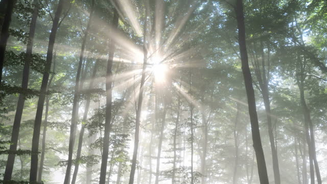 rays of light in forest - tree stock videos & royalty-free footage
