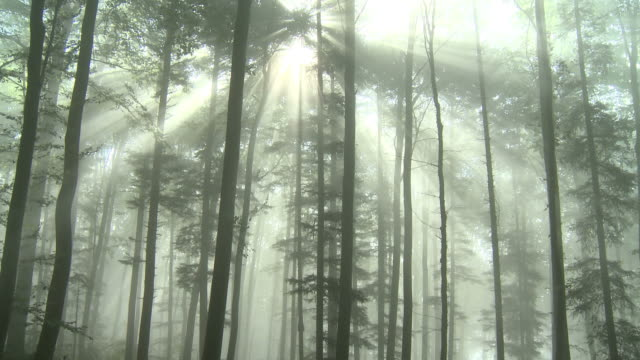rays of light in forest - tree area stock videos & royalty-free footage
