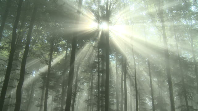 vidéos et rushes de rays of light in forest - bois