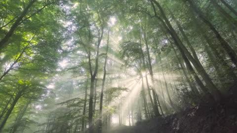vidéos et rushes de rays of light - forêt
