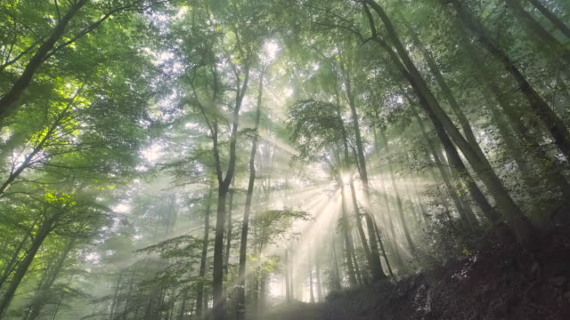 rays of light - atmosphere filter stock videos & royalty-free footage