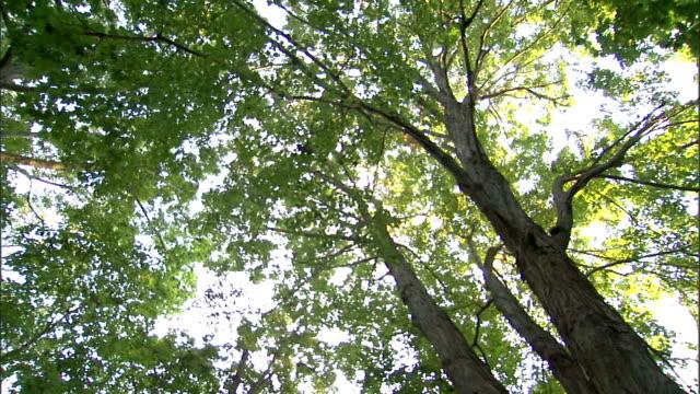 vídeos y material grabado en eventos de stock de rays of sunlight shine through a forest canopy. available in hd. - árbol de hoja caduca