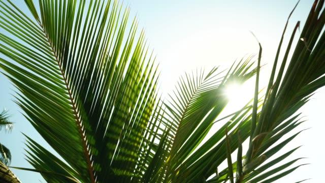 rays of sunshine shining through palm trees - twilight stock videos & royalty-free footage