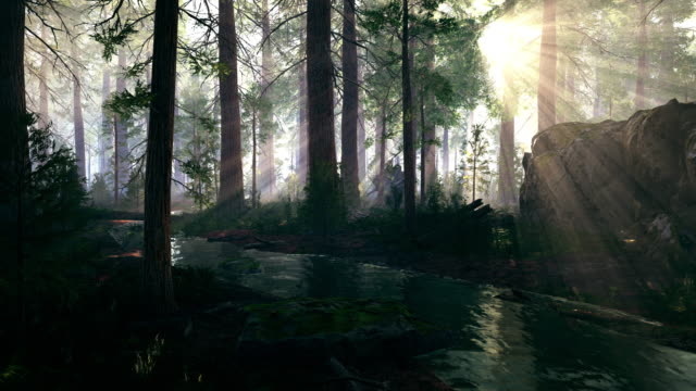rays of the sun falls into the coniferous forest - fantasy stock videos & royalty-free footage