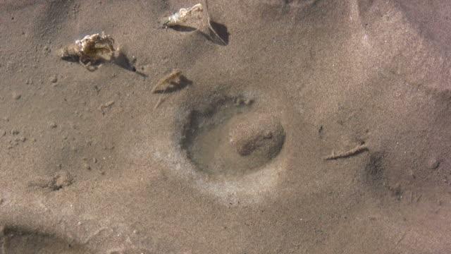 vídeos de stock e filmes b-roll de razorfish (ensis siliqua) hole at dale beach in pembrokeshire, wales - pembrokeshire