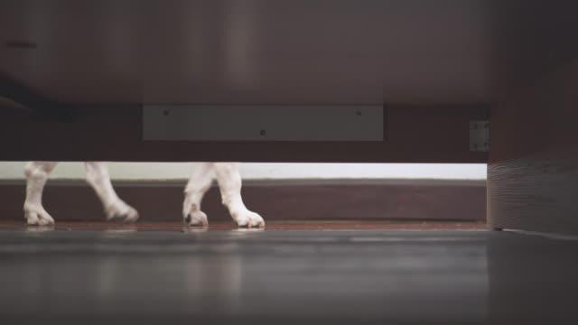 vídeos y material grabado en eventos de stock de jrt reaccionó a llamar, caminar a través de la cama - debajo de