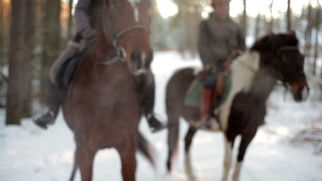 ready steady go - horse stock videos and b-roll footage