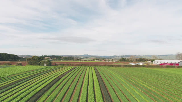 stockvideo's en b-roll-footage met ready to pick crops of vegetables - spinazie