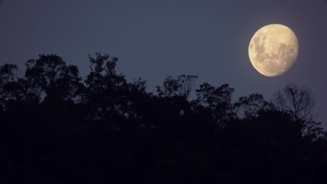 real moon image - telephoto lens stock videos & royalty-free footage