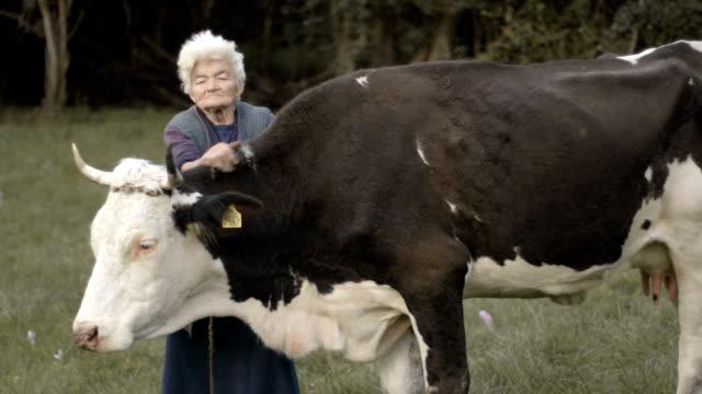 vidéos et rushes de personnes réelles femme âgée - cattle