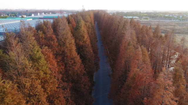 Real Time Aerial view of road through autumnal forest