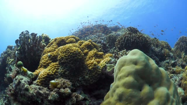 vidéos et rushes de real time ascend coral reef with orange school of fish - anémone de mer