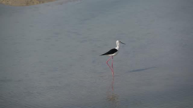 Real Time Dubai wetland park