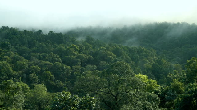 4k real time misty mountain forest in chiangmai, thailand - mack2happy stock videos and b-roll footage