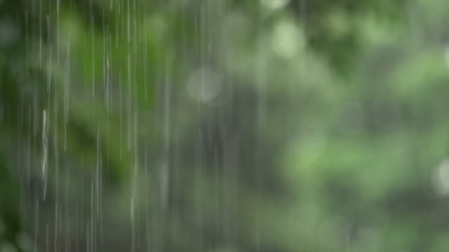vídeos de stock e filmes b-roll de real time rain drop falling with green nature - monção