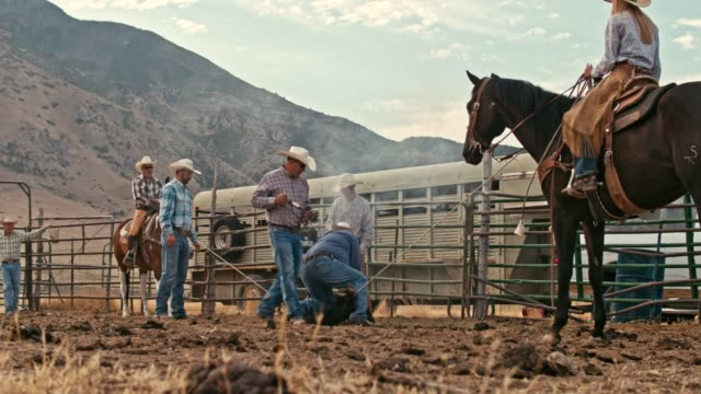 real time video of cowboys branding a steer - moving down stock videos & royalty-free footage