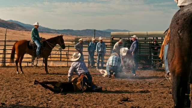 real time video of cowboys branding cows - moving down stock videos & royalty-free footage