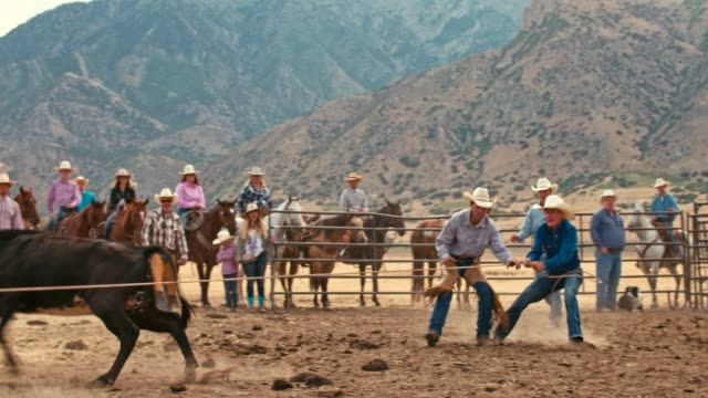 real time video of cowboys catching a steer for branding - rodeo stock videos & royalty-free footage