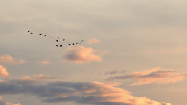 "real time video of ducks flying at sunset - xavierarnau or ""xavier arnau serrat"" stock videos & royalty-free footage"