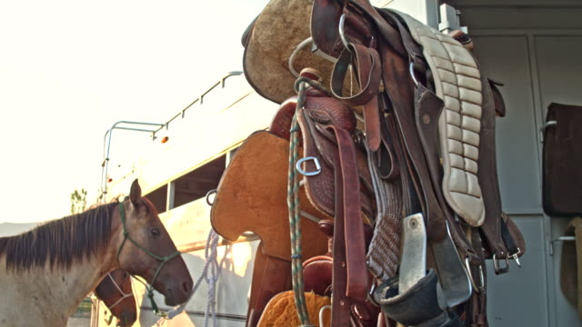Real time video of Equestrian Equipment and Saddles with horse in the background