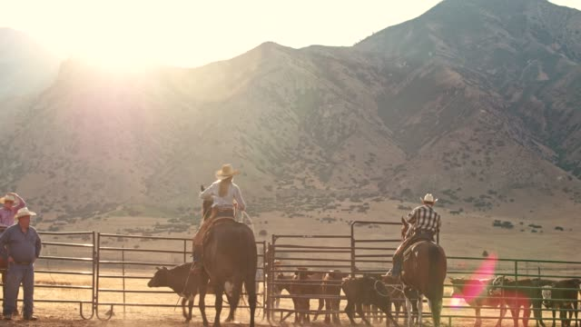 Real time video of farmers catching a Steer for branding in the morning