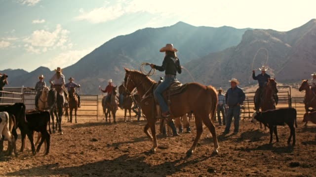 real time video of farmers in utah branding cows - rodeo stock videos & royalty-free footage