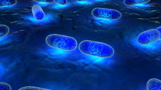 real to life bacteria multiplying - bacterium stock videos & royalty-free footage
