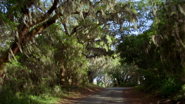 rear car point of view driving on country road with live oak trees and spanish moss / savannah, georgia - spanish moss stock videos & royalty-free footage