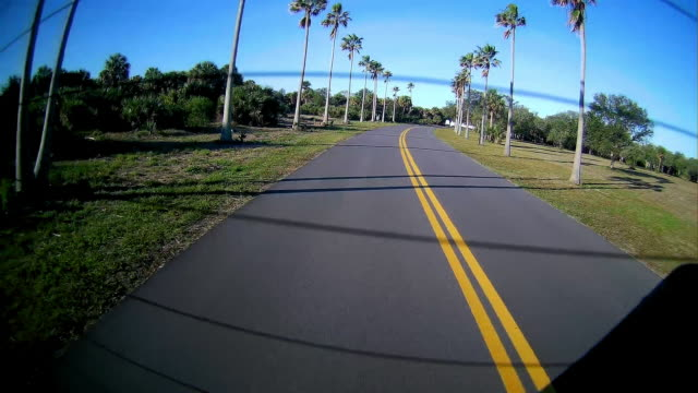 Rear dashboard camera point of view of driving on a road lined up with palm trees in Florida