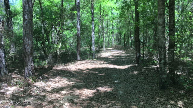 rear view along winding dirt road in forest - florida us state stock videos & royalty-free footage
