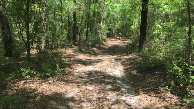 rear view along winding dirt road in forest with pine straw and sand on ground - florida us state stock videos & royalty-free footage
