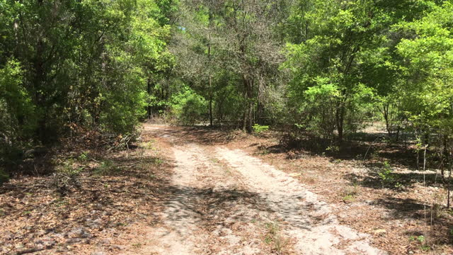 rear view along winding sandy dirt road in forest - florida us state stock videos & royalty-free footage