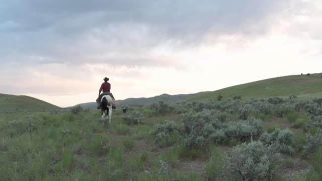 シニア牧場主は彼の側で丘作業犬をオフに乗ると背面します。 - 乗馬点の映像素材/bロール