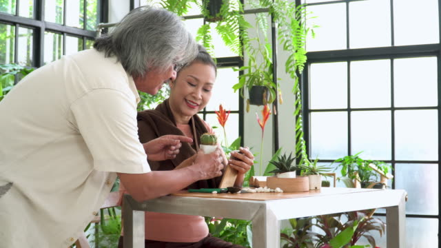 rear view: husband talking wife with happiness, relaxation about the tropical tree as cactus in an indoor garden of a greenhouse as hobbies, and small business. lifestyle of asian active senior couples with white hair after retirement as florist. - tropical tree stock videos & royalty-free footage