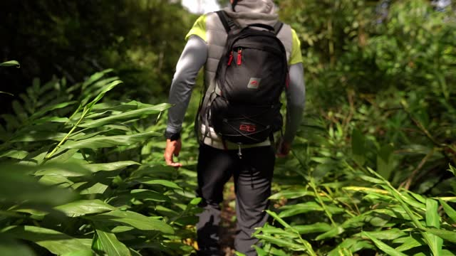 rear view of a man walking into a forest - wilderness stock videos & royalty-free footage