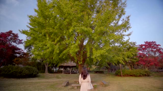 rear view of a woman looking at tree / suncheon-si, jeollanam-do, south korea - human hair stock videos & royalty-free footage