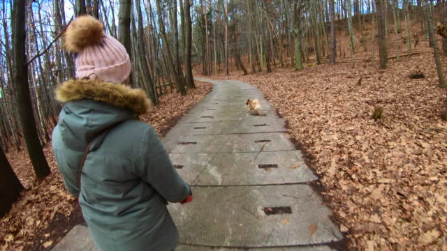 Rear view of a woman walking the dog during winter will cold temperature in a nice forest of the German mountain during travel vacations.