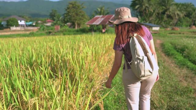 vidéos et rushes de vue arrière d'une femme asiatique marchant sur la crête du riz paddy sous le coucher du soleil dans une scène d'agriculture non urbaine, touchant à l'oreille de riz sur le rizier, le nord de la thaïlande avec un sentiment excité, émotion posit - non urban scene