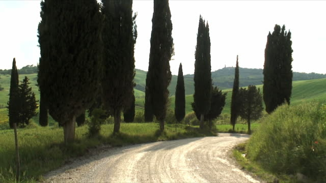 zo ws rear view of car driving on country road with cypress trees, val d'orcia, tuscany italy - von bäumen gesäumt stock-videos und b-roll-filmmaterial