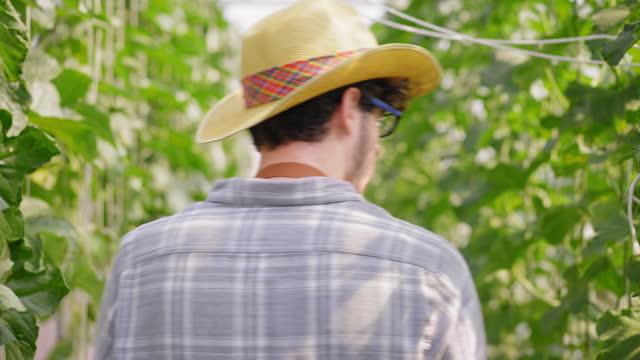 ビーガンと健康的な食事とライフスタイルのための販売に農業農場の中小企業として温室の水耕栽培農場のハイテクにメロンの品質をチェックするために果物農場を歩いて戻って白人男性若� - グリーンハウス点の映像素材/bロール