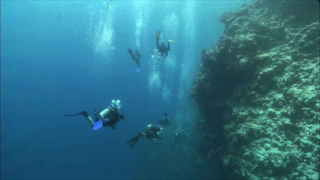WS Rear view of divers near coral reef in Red Sea / Sharm-el-Sheikh, Egypt
