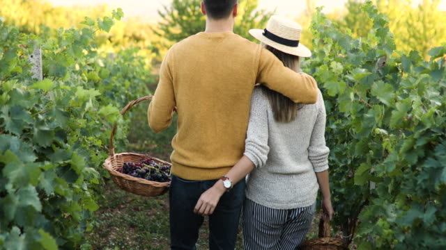 rear view of embracing couple in vineyard - winemaking stock videos & royalty-free footage