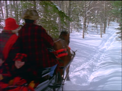 rear view of family in sleigh riding down hill through woods - pflanzenfressend stock-videos und b-roll-filmmaterial