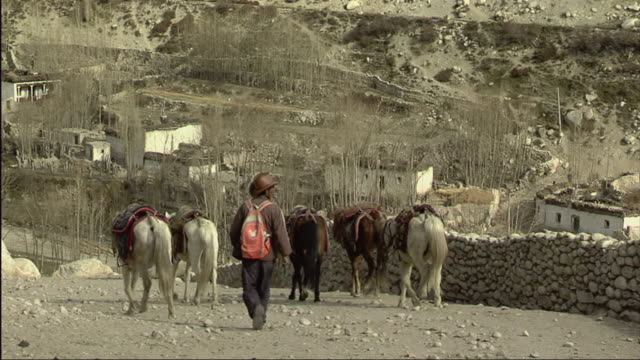 stockvideo's en b-roll-footage met ws tu rear view of farmer with horses and monastery in mountain landscape / tsarang, mustang, nepal - werkdier