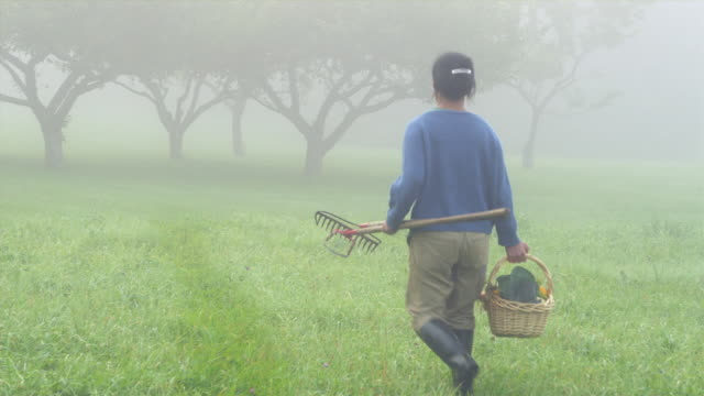 MS WS Rear view of female organic farmer walking in foggy garden with wicker basket full of vegetables and rake, Manchester, Vermont, USA