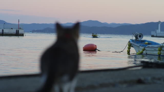 rear view of feral domestic cat looking out to sea r/f to fishing boat approaching - rack focus stock videos & royalty-free footage