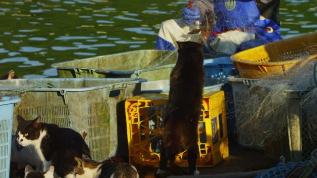 vídeos de stock, filmes e b-roll de rear view of feral domestic cat watching fisherman cleaning nets on dockside - grupo mediano de animales