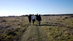 Rear view of four tourists walking in the western cape park in South Africa HD VIDEO
