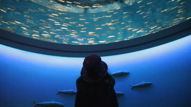 ms rear view of girl (6-7) watching school of sardines at aquarium, monterey, california, usa - 水族館点の映像素材/bロール