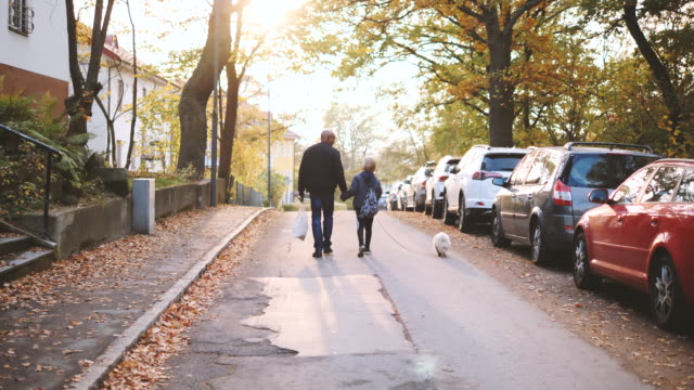 rear view of grandfather and grandson walking with dog on street during autumn - grandparent stock videos & royalty-free footage